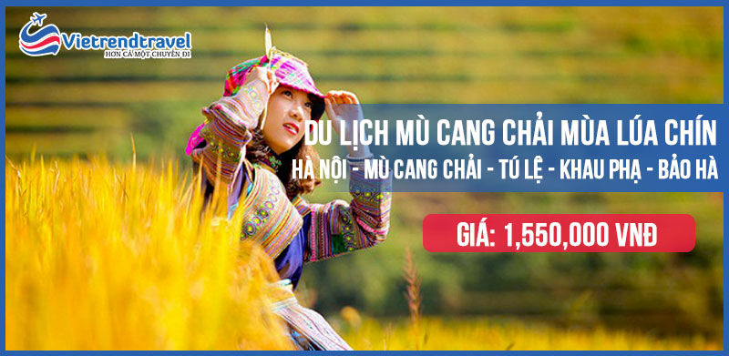 du-lich-ha-noi-mu-cang-chai-mua-lua-chin-vietrend