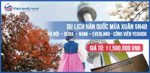 du-lich-han-quoc-mua-xuan-bay-jeju-air-tu-ha-noi-vietrend-travel